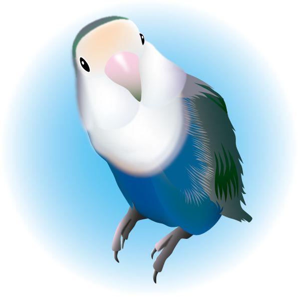 Kozakura2